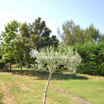 Hus säljes i Provence. Köpa hus i Lubéron. Hus till salu i Ménerbes i Vaucluse. Köpa hus i södra Frankrike. Mäklare i Vaucluse. Fastighetsmäklare Lubéron.